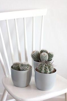 mariaemb.: Cactus ♥