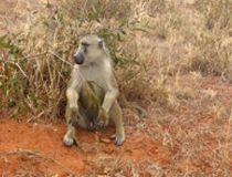 Kenya tour from india best kenyan safari tours with air tickets booking affordable prices from India, delhi. Air Ticket Booking, Air Tickets, Kenya, Safari, Tours, India, Air Flight Tickets, Goa India, Indie