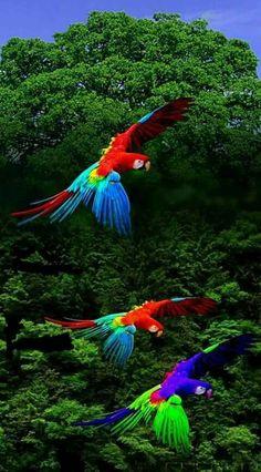 Birds in flight Tropical Birds, Exotic Birds, Colorful Birds, Colorful Animals, Nature Animals, Most Beautiful Birds, Pretty Birds, Cute Birds, Kinds Of Birds