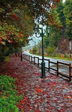 pavement with autumn colours- Xanthi, Greece Beautiful World, Beautiful Places, Santorini Villas, Myconos, Greek Flowers, Outdoor Pictures, Into The West, Autumn Scenery, Flowering Trees