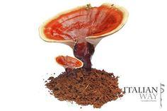 10 Benefici del fungo ganoderma Il Ganoderma Lucidum è un fungo che cresce spontaneamente in Cina e in Giappone. In micoterapia e ne ganoderma lucidum  reishi
