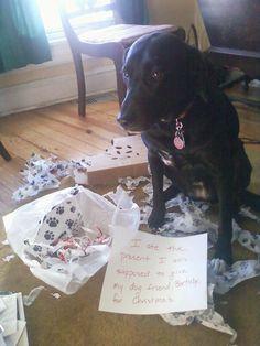 Naughty dog... http://ift.tt/2r4fUP5