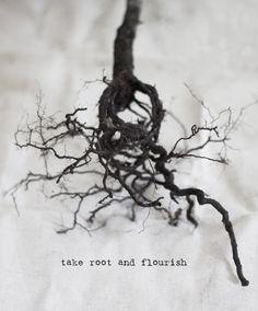 take root & flourish