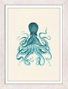 Wall decor poster Vintage octopus no.09- sea life print- vintage natural history- The great turquise octopus