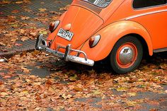 An orange colored Volkswagen Beetle with dry leaves surrounding it. -- Car Pictures