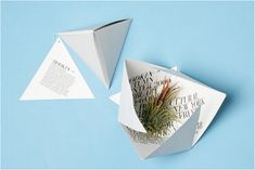 Invitation to Fashion Week show at New York Horticultural Society. The air plant survives without water or soil.