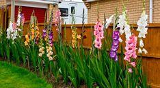 Vegetable Garden, Outdoor Structures, Exterior, Gardening, Flowers, Plants, Diy, Garden Ideas, Gladioli