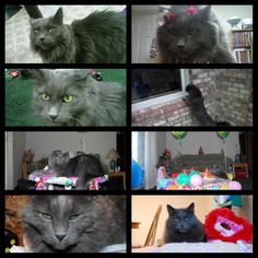 My name is WOLFIE and I have been missing for two years my owners would really like to find my way back home to Macomb Michigan Found Cat, Back Home, Cats, Animals, Gatos, Animales, Animaux, Animal, Cat