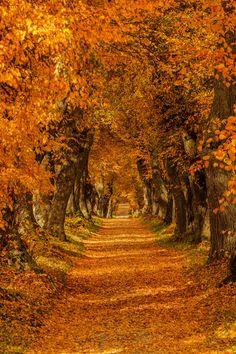 Autumn Dream by BSGuyIncognito.deviantart.com on @DeviantArt