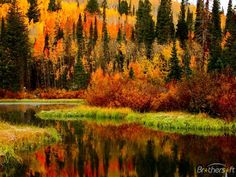 a very colourful reflections