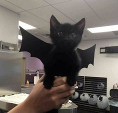 Cute Little Animals, Baby Animals, Funny Animals, Vintage Goth, Cat Aesthetic, Oui Oui, Hamsters, Cat Lady, Pretty Pictures