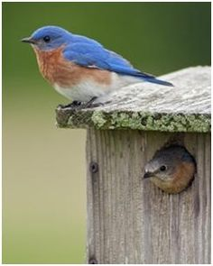 Invite songbirds to your backyard and garden. Help yourself to dozens of free, DIY plans for birdhouses, bird feeders, nesting boxes and bird baths.