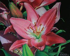 Color pencil artwork by Pamela Clements. Lilies are my favorite flower.