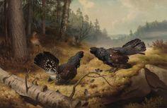"""The Fighting Capercaillies"" / ""Taistelevat metsot"", 1886 -oil on canvas- Ferdinand von Wright - Ateneum Finland Forest Scenery, Google Art Project, Most Beautiful Birds, Ferdinand, Wildlife Art, Famous Artists, Art Google, Art Museum, Art History"