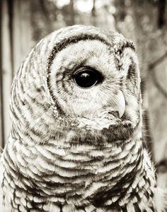 Wise Old Owl Art Print