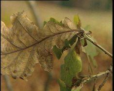 In de herfst vallen de blaadjes van de bomen. Maar waarom eigenlijk?