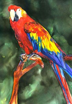 """$200.00 - 14"""" x 18"""" Original Watercolor painting / Unframed / Will ship flat & very well protected. I wanted to paint a bright, colorful bird ... what better than a Macaw?! The background is a muted greenish which really makes the bird stand out! This would look great cropped with a matte or have the edges of the painting exposed for that watercolor texture to show!"""