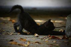 Fall Softly In Black