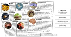 Animal Kingdom Information Cards - 9 information cards and pronunciation labels for each