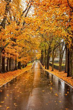 Plan a Road Trip to Lexington, Kentucky, for  Spectacular Fall Foliage