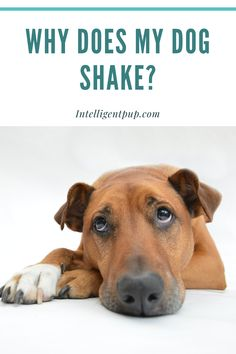 Dog vomiting can indicate serious health issue. Find our common reasons and causes for dog vomiting and what to do if you dog starts to throw up. Tiny Dog Breeds, Dog Breeds Little, Best Dog Breeds, Dog Training Books, Training Your Puppy, Dog Health Tips, Pet Health, Dog Shaking, Cool Dog Houses