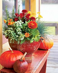 Fall Container Garden --- red cockscomb celosia, yellow pansies, blue fescue (Festuca glauca 'Elijah Blue'), orange 'Peter Pan Mix' zinnias, 'Pink Pewter' lamium, 'Deep Orange' pansies and rosemary. Pumpkins and gourds next to fall container adds extra splash of color......from Midwest Living