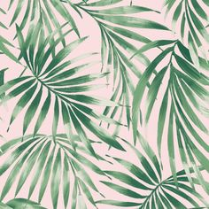 Graham & Brown Kabuki ft Pink Vinyl Textured Ivy/Vines Unpasted Paste the Wall Wallpaper at Lowe's. Elegant Leaves wallpaper is ideal design to freshen up your living space, bedroom or even bathroom and kitchen. This stunning tropical wallpaper can be Pink Removable Wallpaper, Blush Pink Wallpaper, Palm Leaf Wallpaper, Tropical Wallpaper, Textured Wallpaper, Pink And Green Wallpaper, Bathroom Wallpaper Leaves, Parrot Wallpaper, Spring Wallpaper