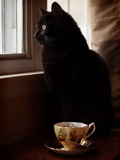 Black Cat and a cup of tea. Lots of coffee and lots of black cats. My preference. Drink and pin away. Enjoy tea or coffee. Different Types Of Cats, Kinds Of Cats, Crazy Cat Lady, Crazy Cats, I Love Cats, Cute Cats, Adorable Kittens, All Black Cat, Black Cats