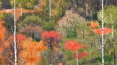 Com 97 anos, artista usa o Paint para criar verdadeiras obras de arte  http://www.tecmundo.com.br/arte/42336-com-97-anos-artista-usa-paint-para-criar-verdadeiras-obras-de-arte.htm