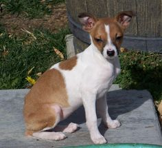 S.A.F.E. Animal Rescue - Saving Animals From Euthanasia