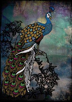 peacock paon