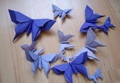 farfalla con video