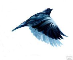 adam-s-doyle-birds-1