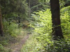 2013   Venez découvrir les forêts de l'Oise !   © Oise Tourisme Venus, Oise, 2013, Country Roads, Plants, Tourism, Plant, Planets, Venus Symbol