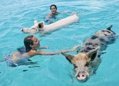 Guys, You Can Swim with Pigs in the Bahamas!