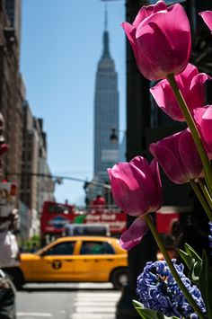 Spring is in bloom in New York City. New York City, Empire State Of Mind, I Love Nyc, Spring Photography, City That Never Sleeps, Concrete Jungle, City Living, Spring Time, Nyc Spring