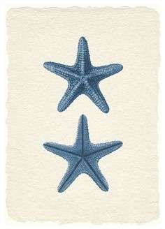 Navy Sea Star Print