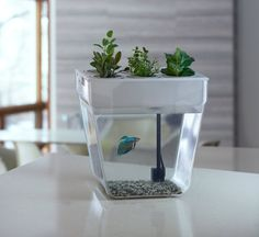 The AquaFarm combines a 3-gallon fish tank with a vegetable and herb grow bed into one closed-loop system that fits easily on any kitchen counter. The waste from the fish provides nutrients for the plants, and the plants clean the water for the fish! http://www.xmasgiftideas.org/shop/back-to-the-roots-aquafarm-v2/