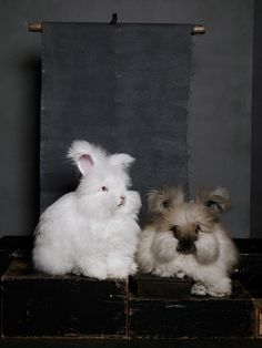 Noah and Daniel Bunny Photography