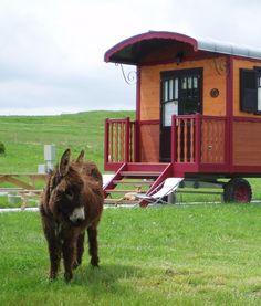 Une de nos roulottes avec notre âne