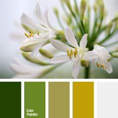 The color palette number 135 ~ white , mustard green , green , green… Colour Schemes, Color Combos, Color Patterns, Design Seeds, Green Colour Palette, Color Balance, World Of Color, Color Swatches, Color Stories