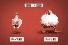 Anti GMO Foods and Fluoridated Water: Unraveling food industry lies - Your chicken is full of liquid fillers and chemicals