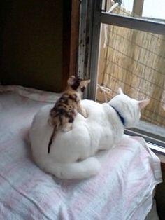 amnemonic:    猫より可愛い動物いんの?: はれぞう