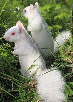 Amazing Animal Pictures, Amazing Animals, Unusual Animals, Animals Beautiful, Animals And Pets, Funny Animals, Melanistic Animals, Rare Albino Animals, Mundo Animal