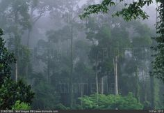 Rainforest in mist danum valley sabah borneo. Millions of premium Stock photos and illustrations created by leading commercial photographers, world-famous Museums, Historical Archives and Private Collections. Image ID: Travel Images, Borneo, Mists, Places To Visit, Stock Photos, World, Illustration, Illustrations, The World