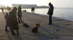Triest eignet sich auch super für einen Besuch mit Hund- ca. 50 min mit dem Zug von der Aprilia entfernt Am Meer, Strand, Super, Nature Reserve, Train, Vacation, Pet Dogs, Animals