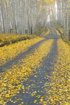Last Dollar Road, Uncompahgre National Forest near Telluride, Colorado | Igor Menaker