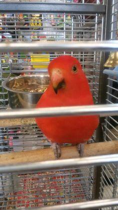 I like parrot