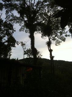 bromélias olham a montanha.