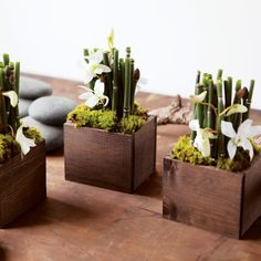 Reed Orchid Trio. This kinda makes me think of bamboo. A thought for simple elegant centerpieces.